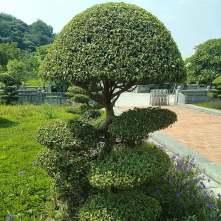 pagoda02