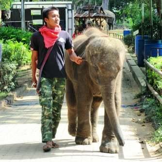 elefantethai1