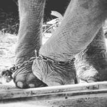 elefantethai2